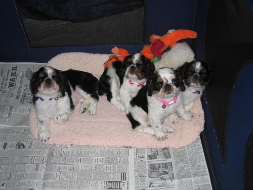 Puppies after their bath 11-25
