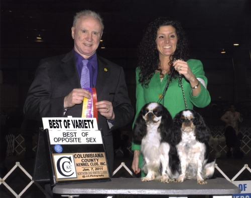 A wonderful win for dad and daughter under judge  Dr. Reeve-Newson. Winners dog and winners bitch also.